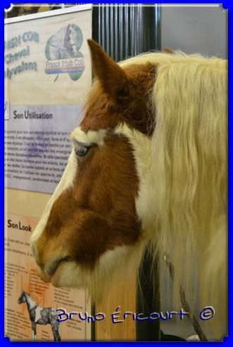 Salon du cheval de Paris 2012 ERI_8974