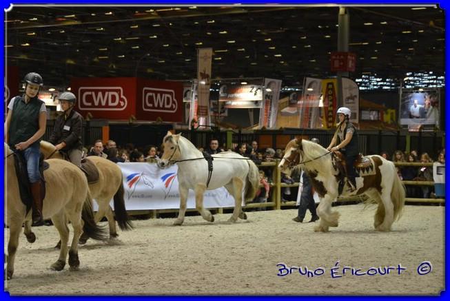 Salon du cheval de Paris 2012 ERI_9047