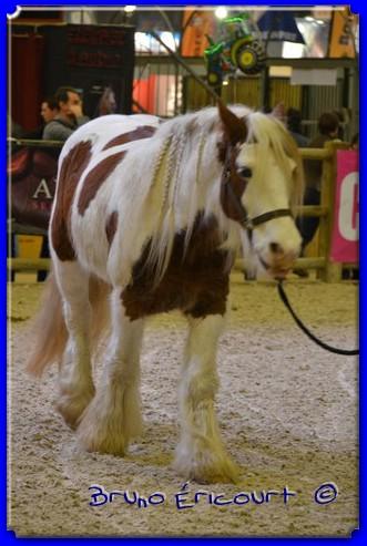 Salon du cheval de Paris 2012 ERI_9139