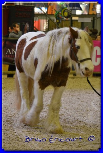 Salon du cheval de Paris 2012 ERI_9140