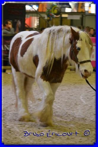 Salon du cheval de Paris 2012 ERI_9141