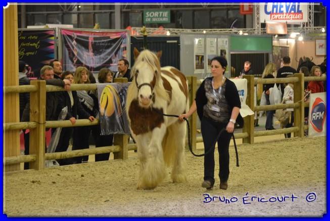 Salon du cheval de Paris 2012 ERI_9142