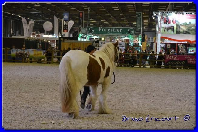 Salon du cheval de Paris 2012 ERI_9148