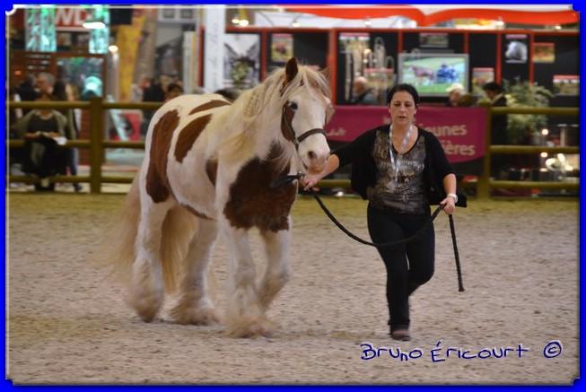 Salon du cheval de Paris 2012 ERI_9159