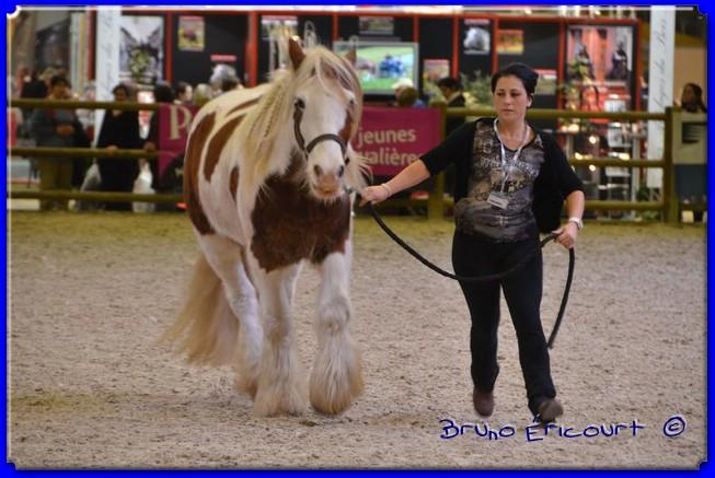 Salon du cheval de Paris 2012 ERI_9164
