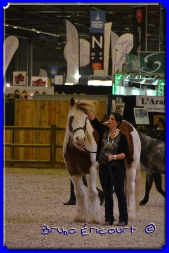Salon du cheval de Paris 2012 ERI_9238